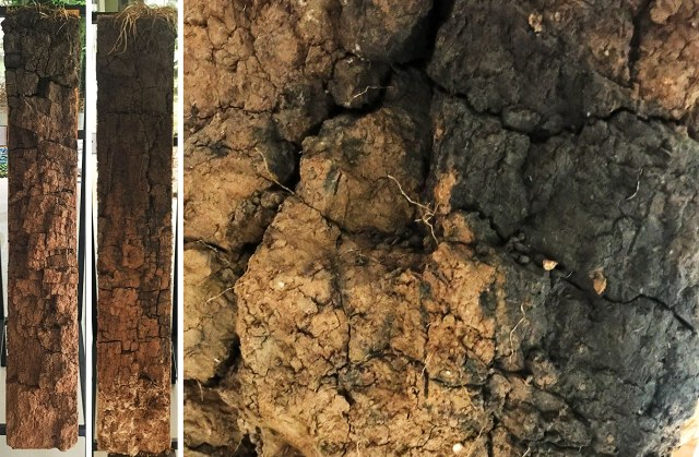 These are soil profiles taken from the trial. On the left is a core from the continuous cropping/no fertiliser field, and in the middle is one from the 50% pasture rotation. Although both soils naturally crack vertically, only the pasture rotations showed organic matter going deep in to the profile. It may be fluke that the samples were taken in these places, but it was consistent across all five cores they had on display. On the right is a close up of the higher organic matter soil from about a meter deep