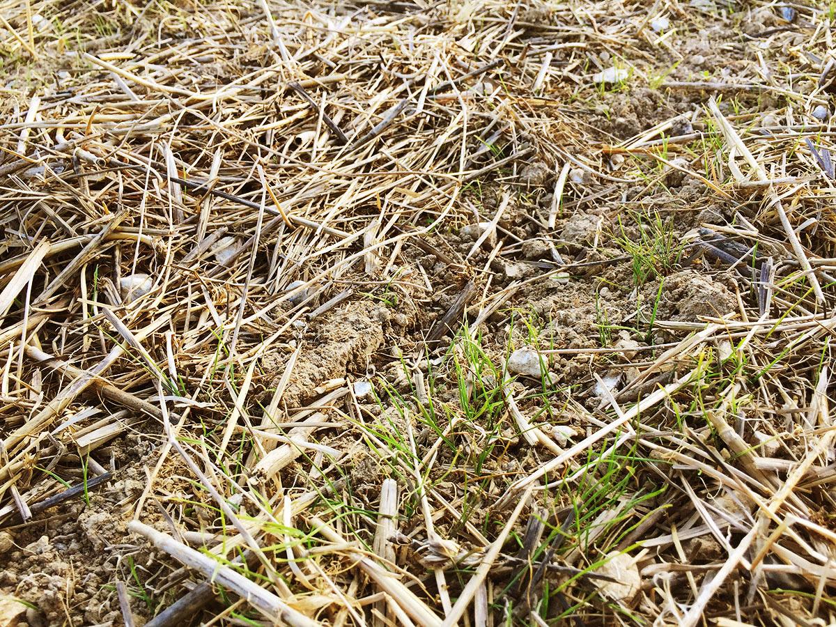 Blog thriplow farms building resilient productive profitable soils - Profitable crops small plots ...